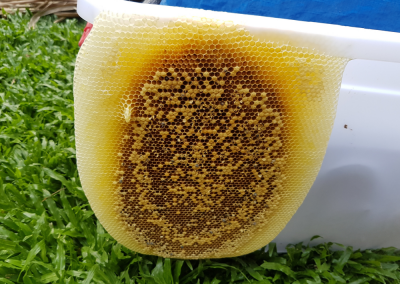 Asian Honey Bee CRS