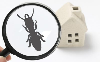 6 Secrets to Fight Termite Infestations
