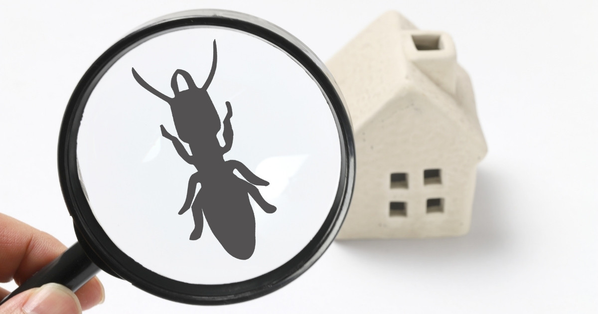Cairns Pest Control Termites