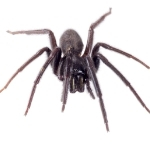 Pest Control in Cairns spider