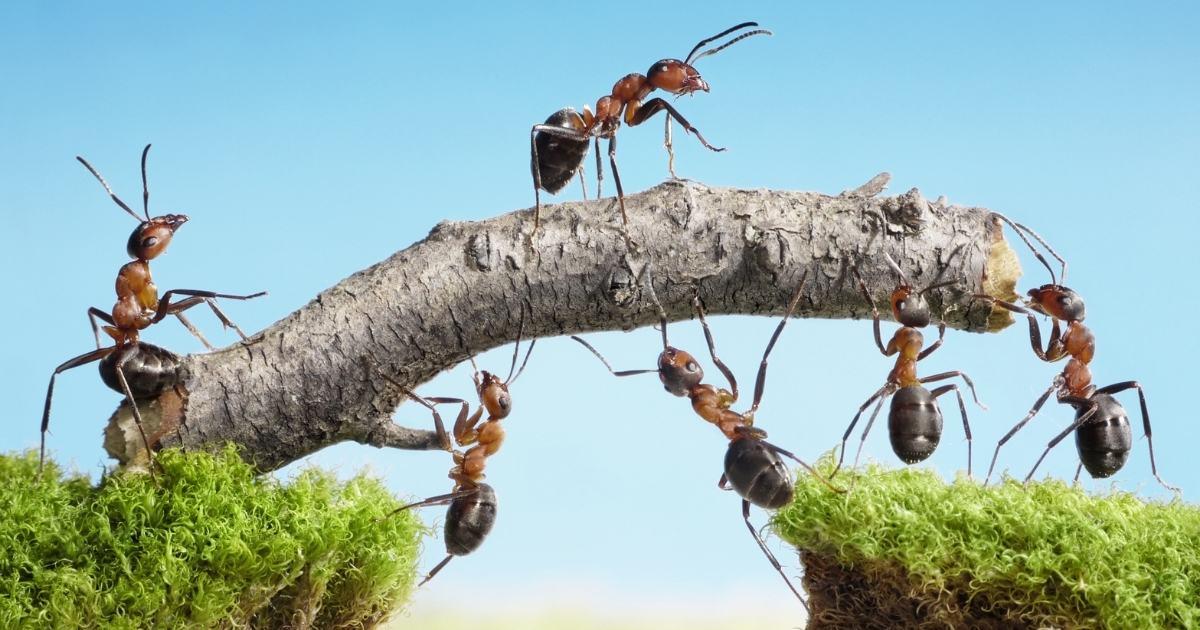 Pest Control Cairns Ant Blog