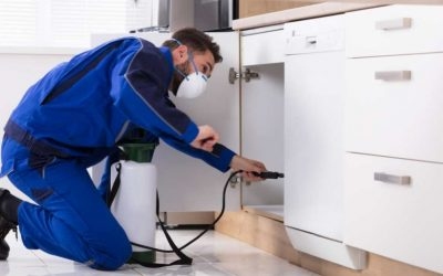 Top 10 DIY Cairns Pest Control Tips