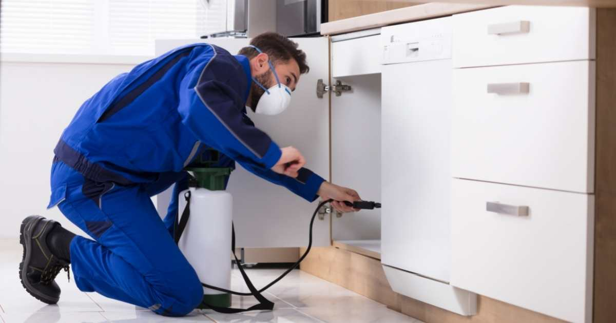End Of Lease Pest Control in Cairns