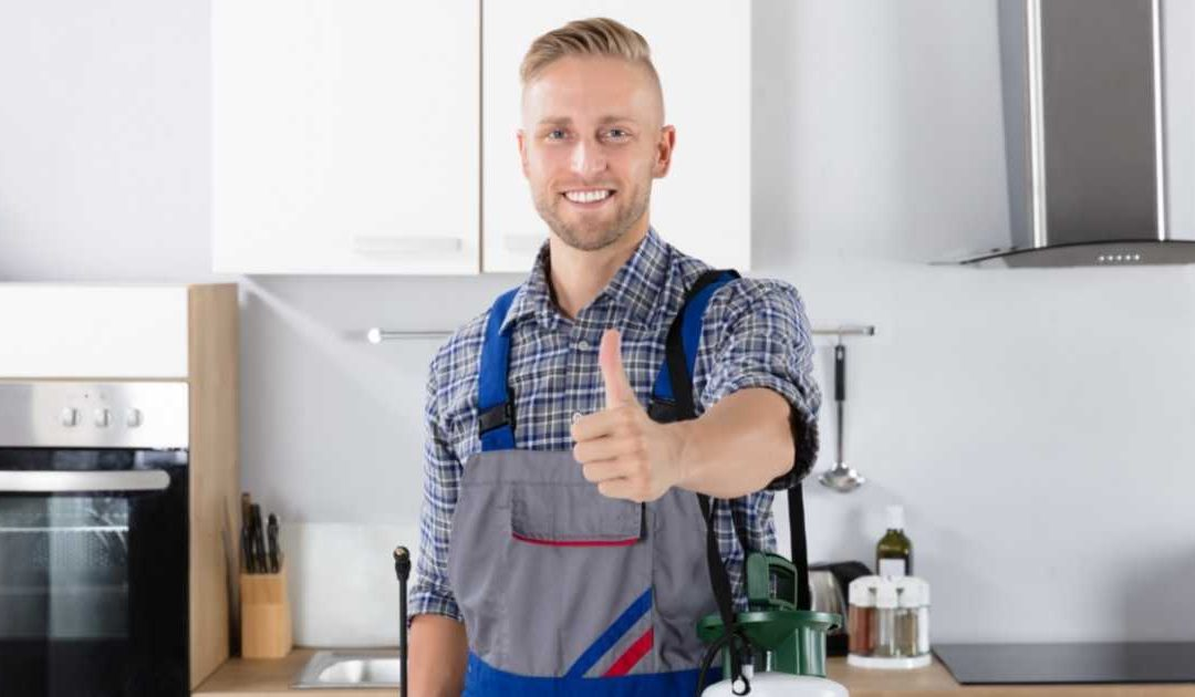 How Often Should I Pest Control My Home